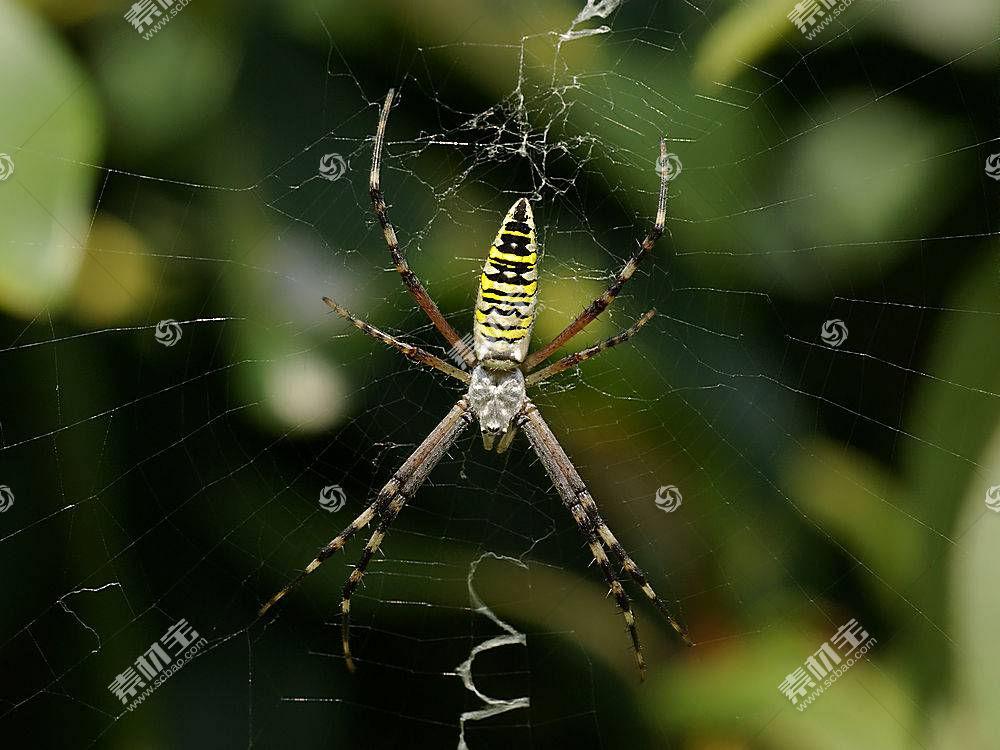 蜘蛛,动物387216