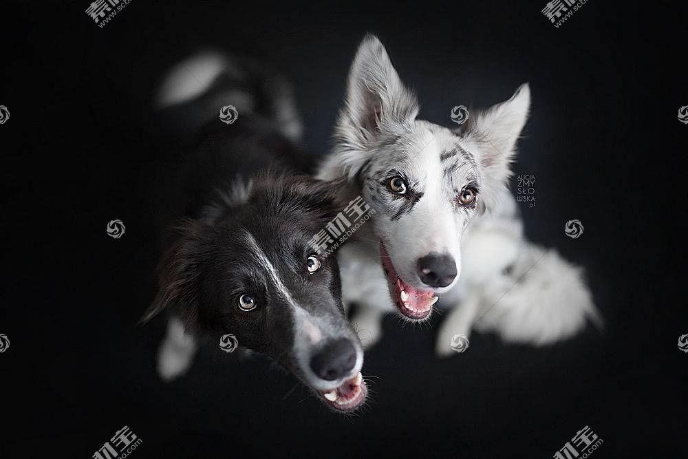 黑色,白色,狗,动物567624