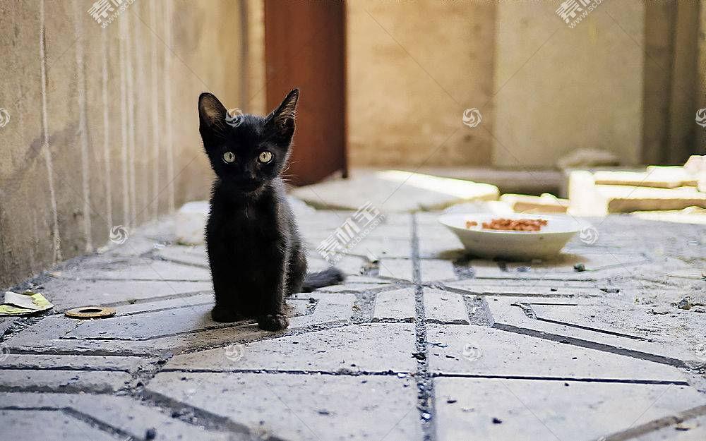 猫,小猫,小动物,动物466265