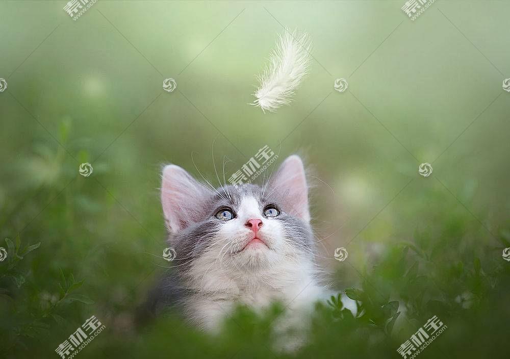 猫,性质,动物,抬头看578330