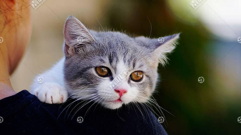 猫,动物597026