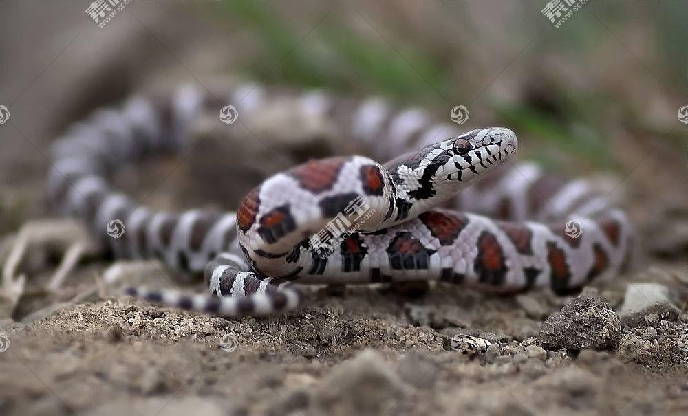蛇,动物,爬行动物567551