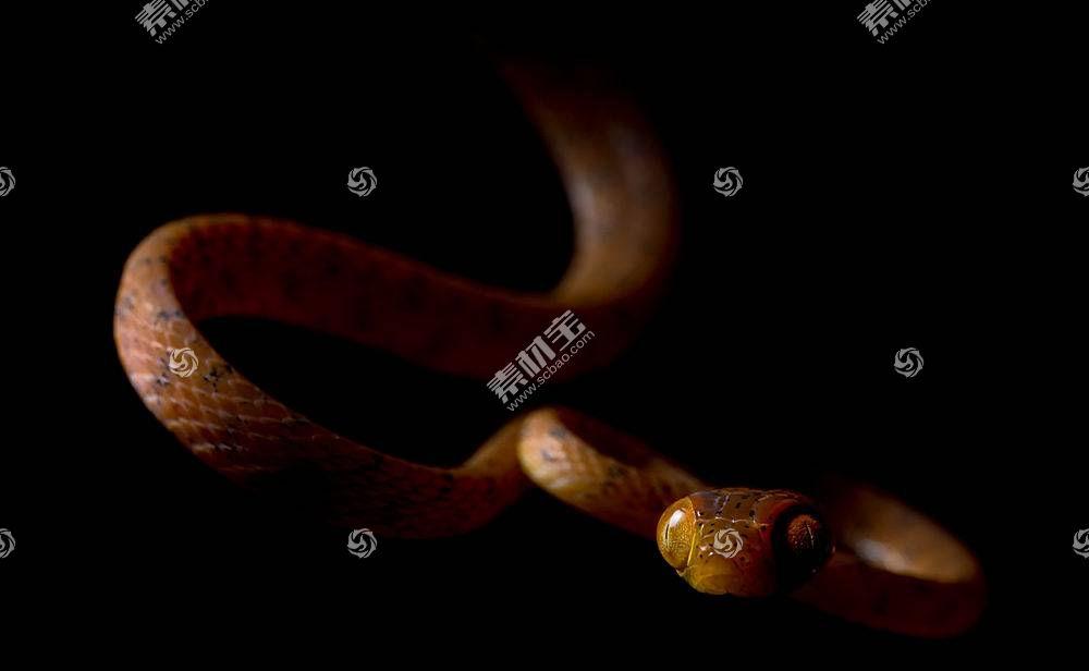 黑暗,爬行动物,蛇,动物,黑色的背景534343