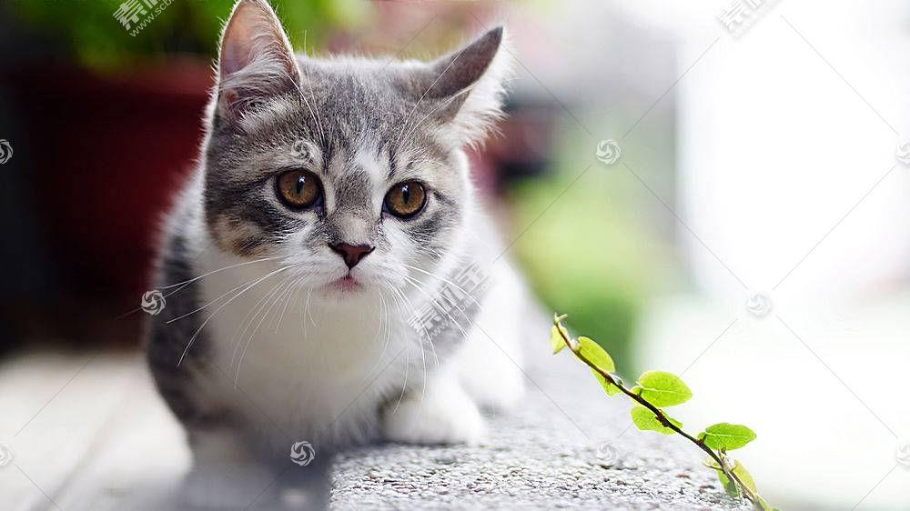 猫,动物624350