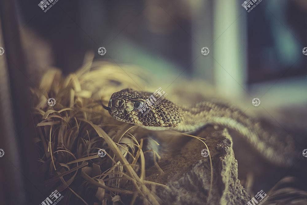 蛇,爬行动物,动物,伪装422486