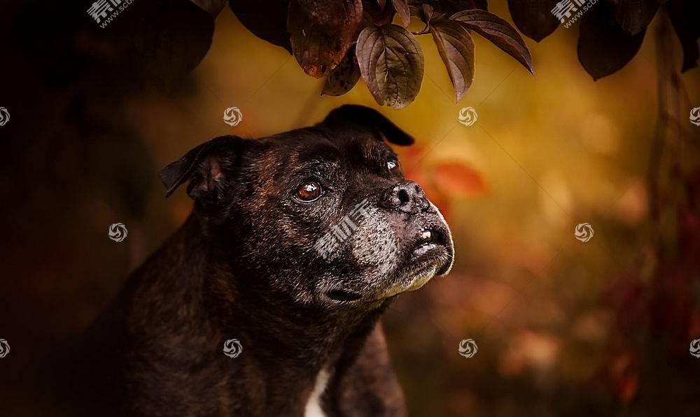 黑暗,狗,动物569048