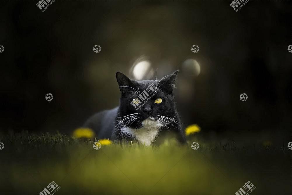 猫,动物647310