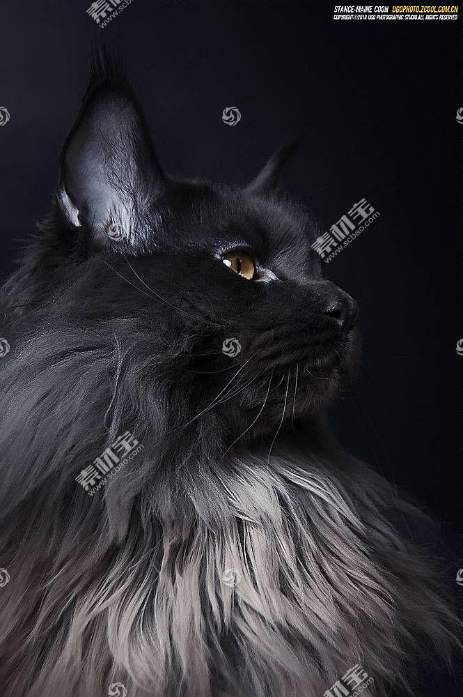 猫,动物670760