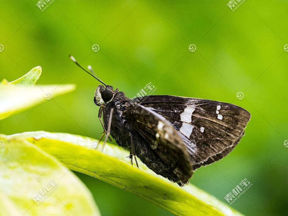 蛾,树叶,昆虫,动物462739