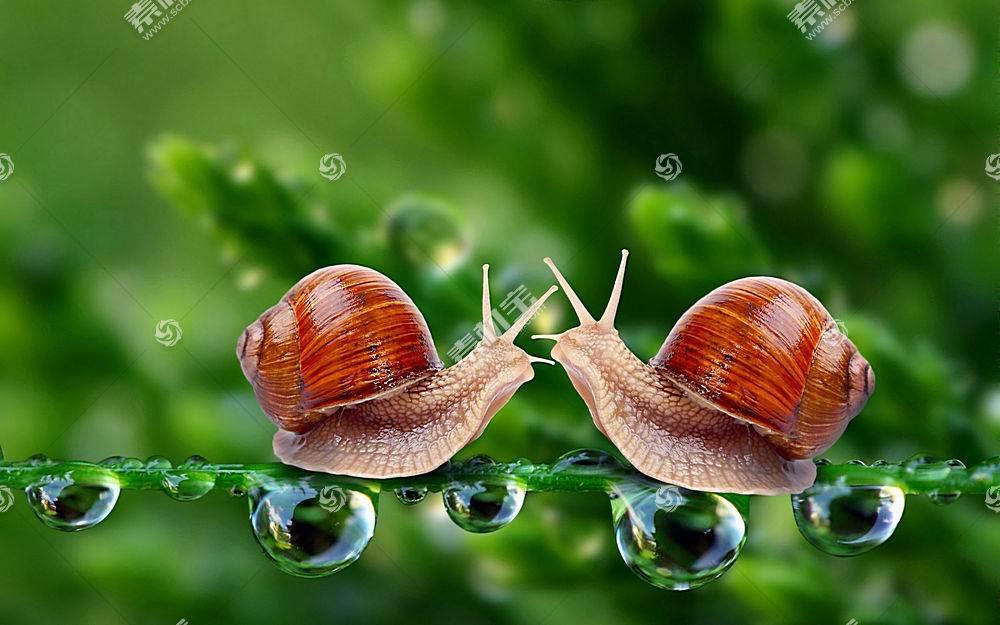蜗牛,动物383531