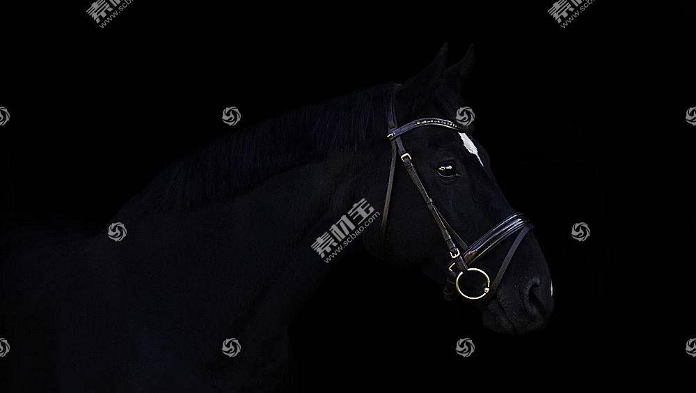 黑暗,马,动物594134