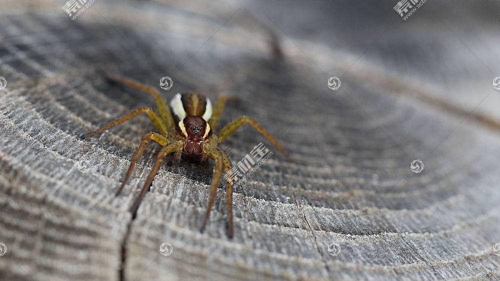 蜘蛛,动物,昆虫,特写461044