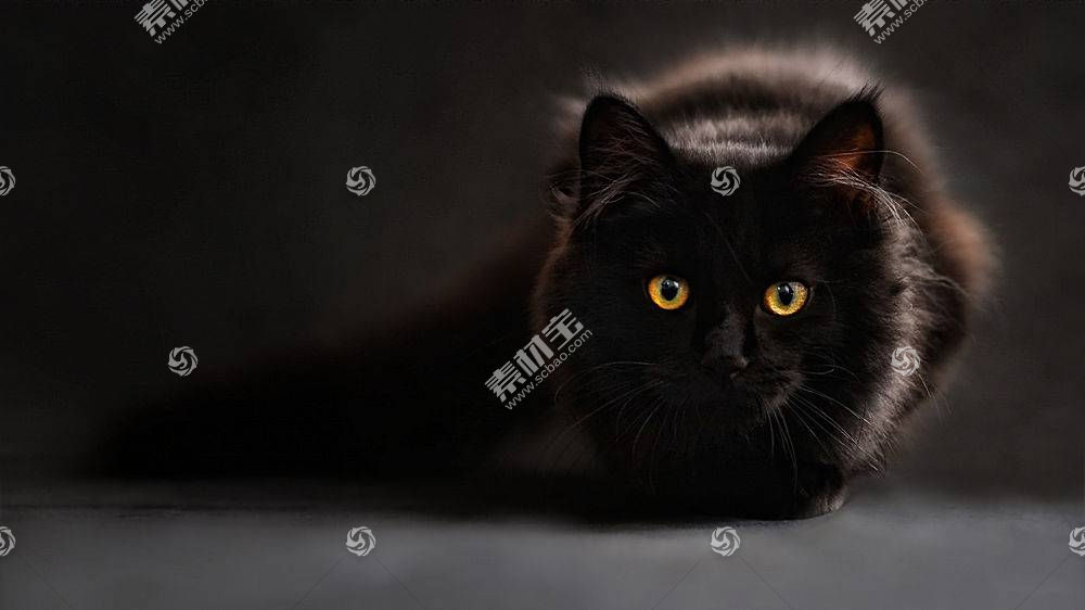 黑猫,猫,动物,猫的眼睛398016