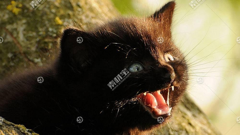 黑猫,猫,动物398069