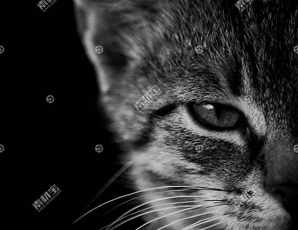 猫,单色,动物,小猫577110