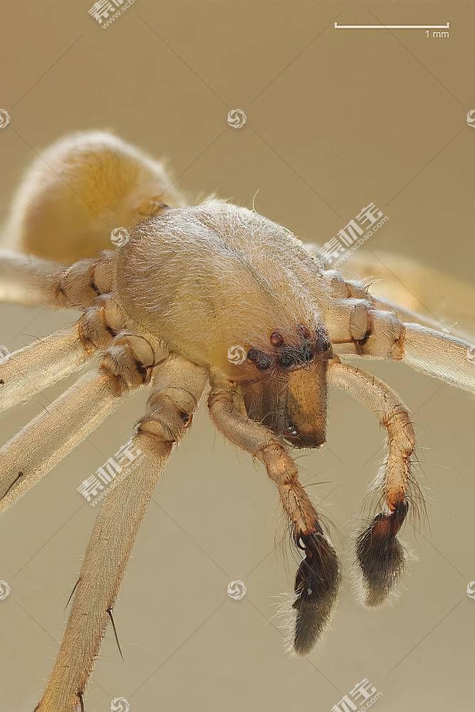 蜘蛛,动物,蜘蛛387229