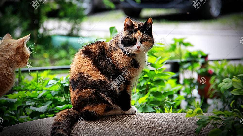 猫,摄影,性质,动物527186