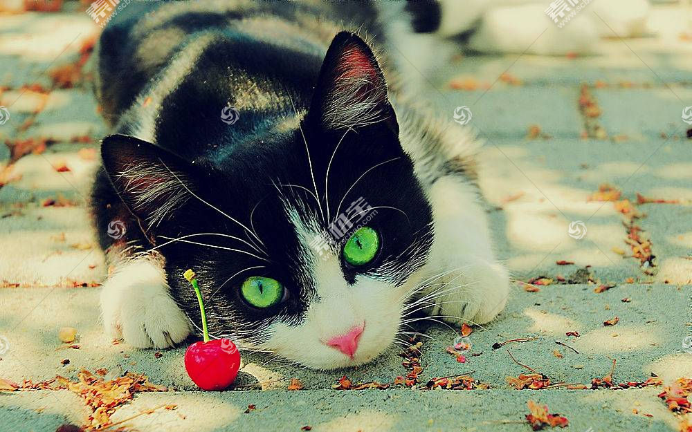 猫,景深,动物568607