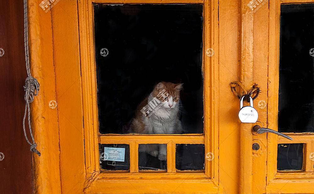 猫,橙子,门,动物558039