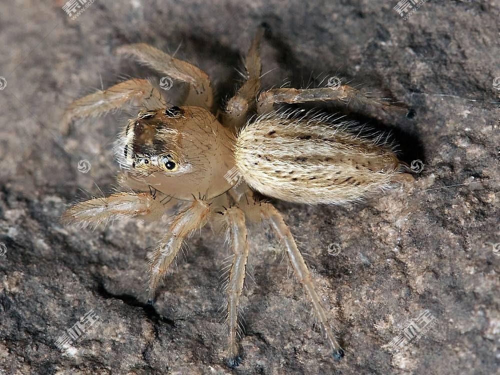 蜘蛛,动物387242