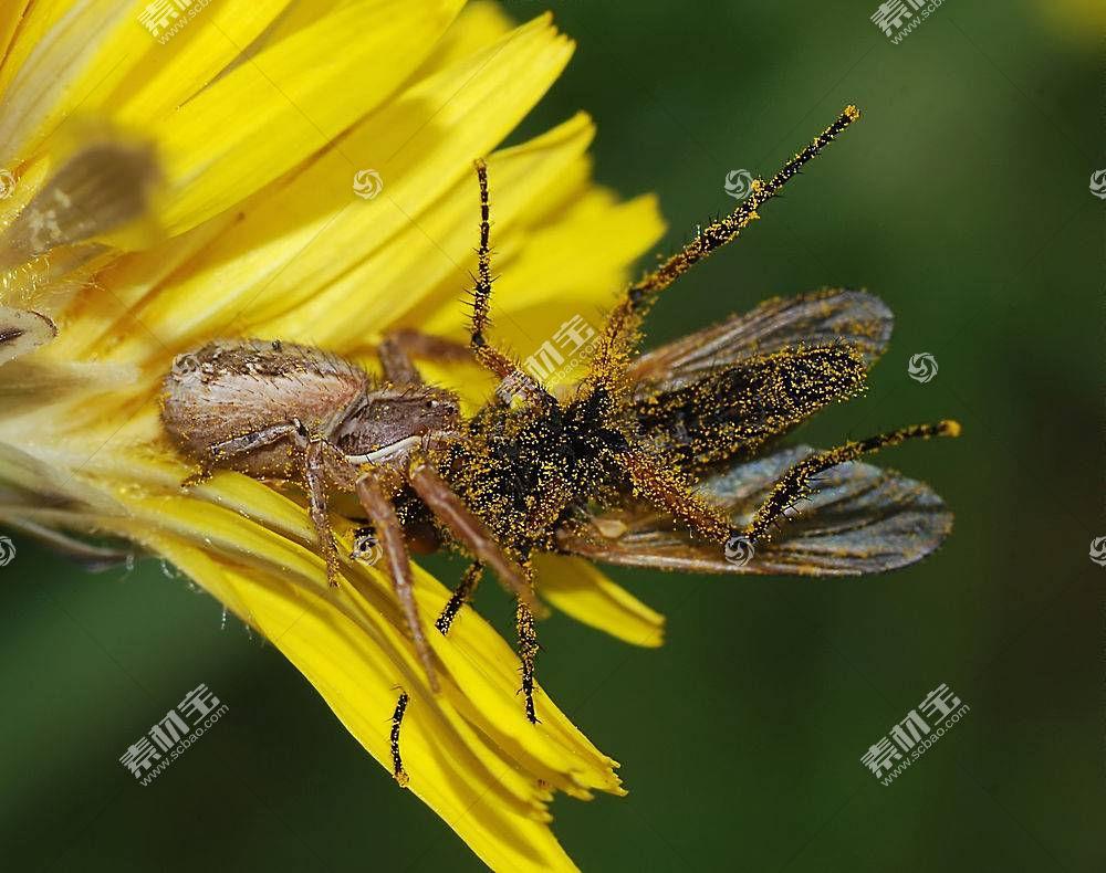 蜘蛛,昆虫,飞,动物387279