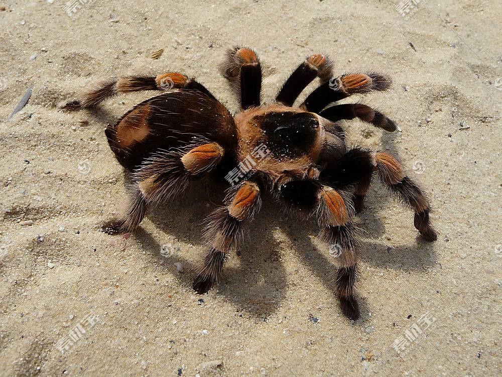 蜘蛛,狼蛛,动物387252