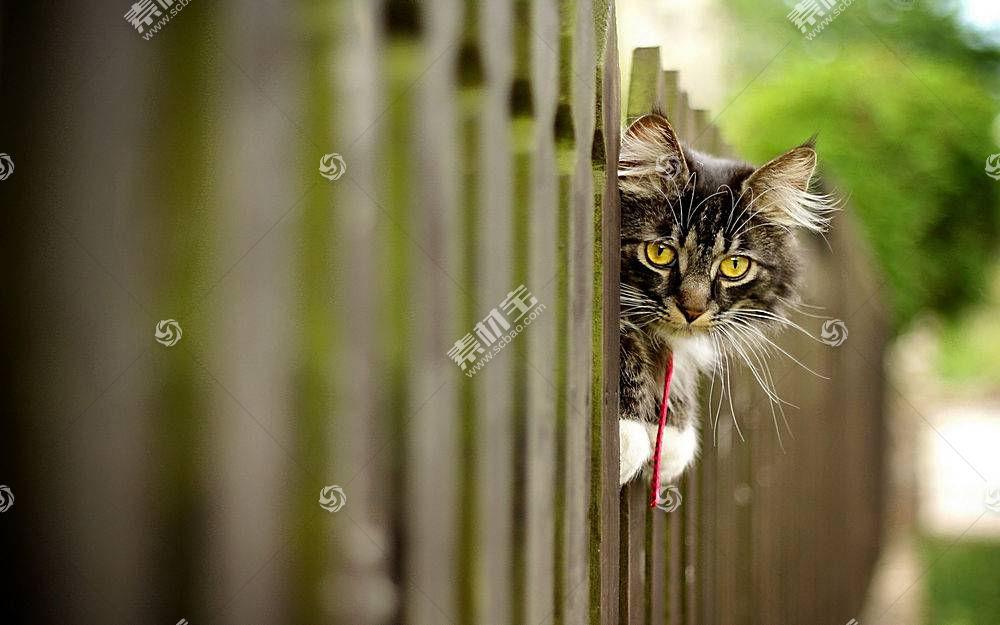猫,篱笆,动物471186