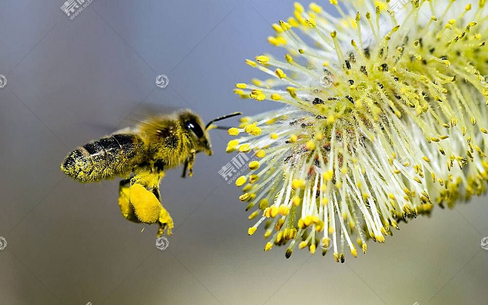 蜜蜂,动物,花卉407515
