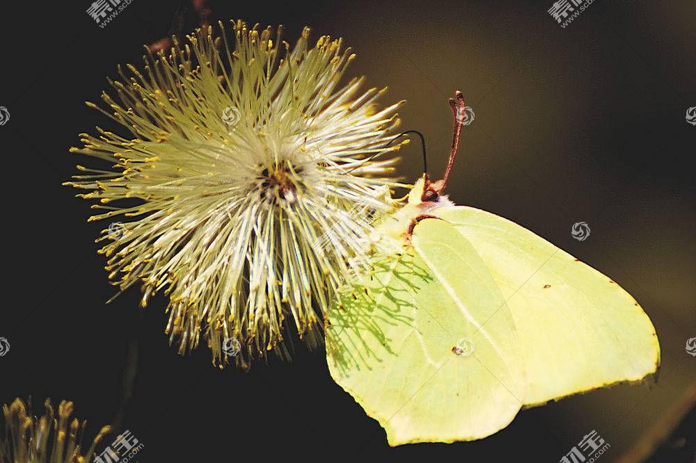 蝴蝶,动物,性质438206