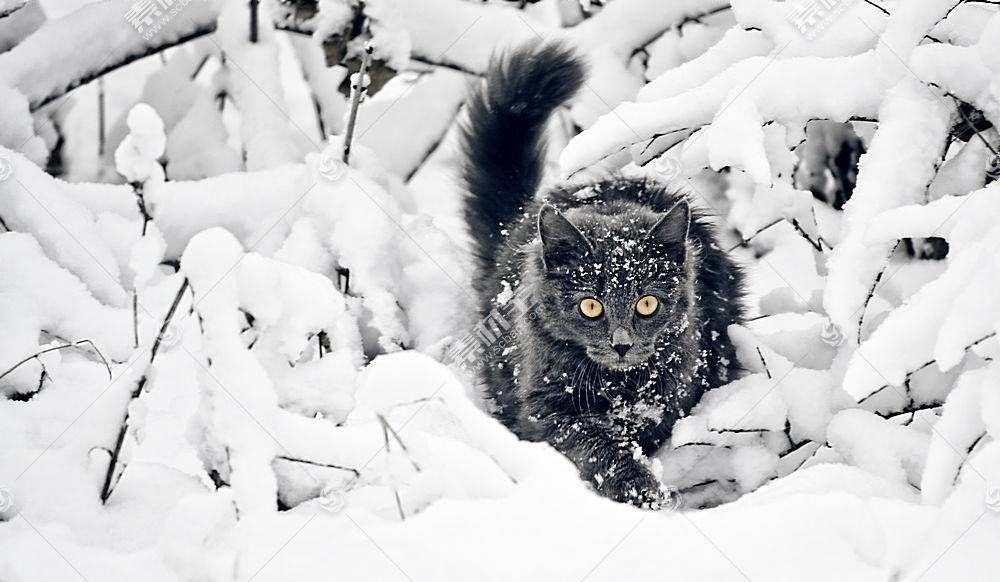 猫,雪,动物,性质656551