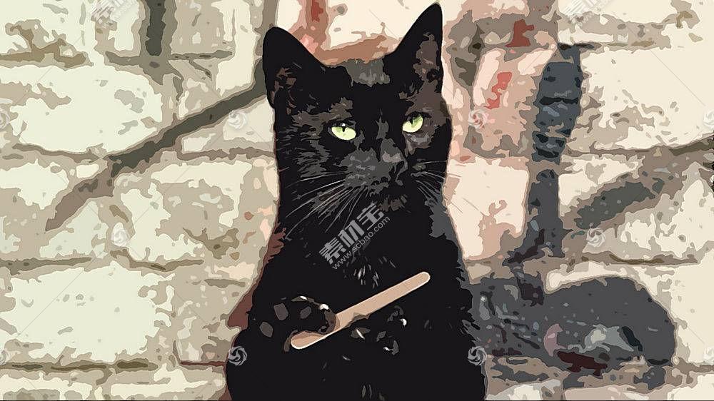 猫,黑猫,动物,幽默386003