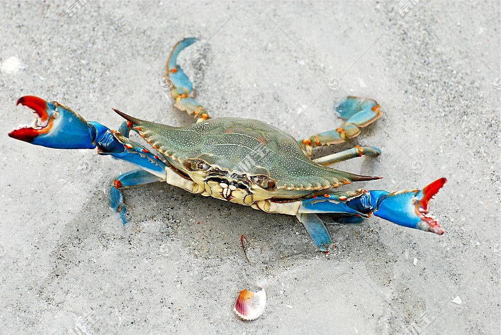 螃蟹,动物,性质,甲壳类动物395534