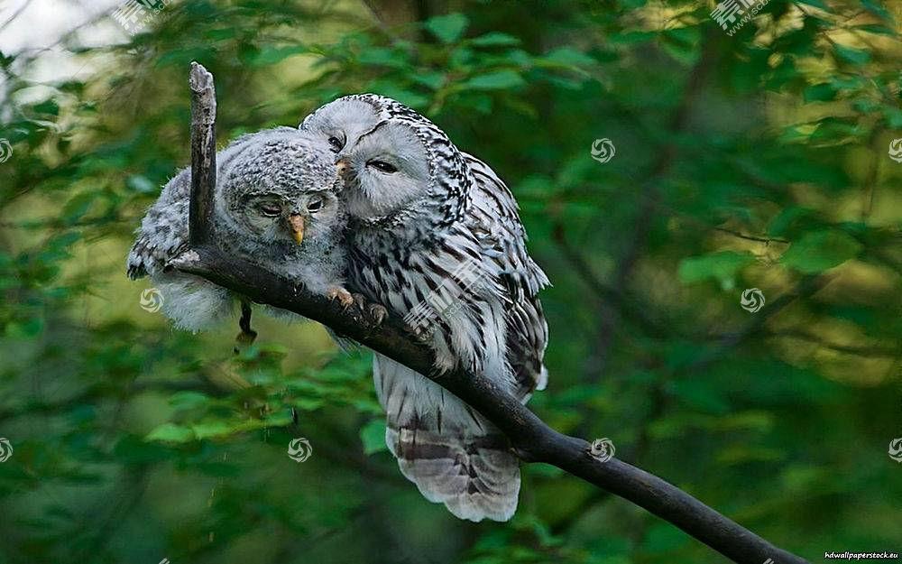 猫头鹰,鸟类,动物,野生动物384031