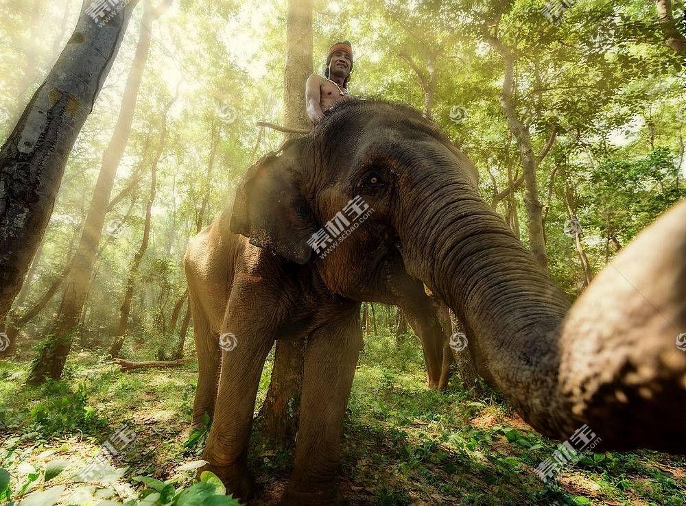 象,动物,泰国410375