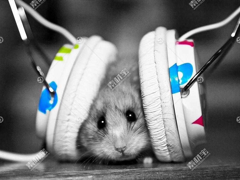 仓鼠,动物,头戴耳机241372