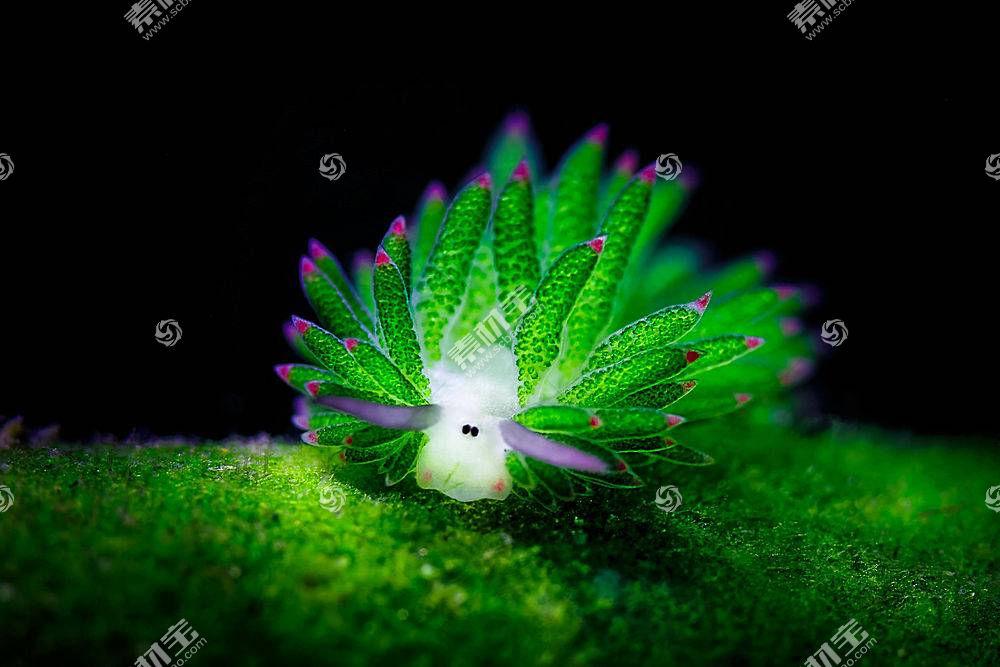 动物,Nudibranchia,水下340554