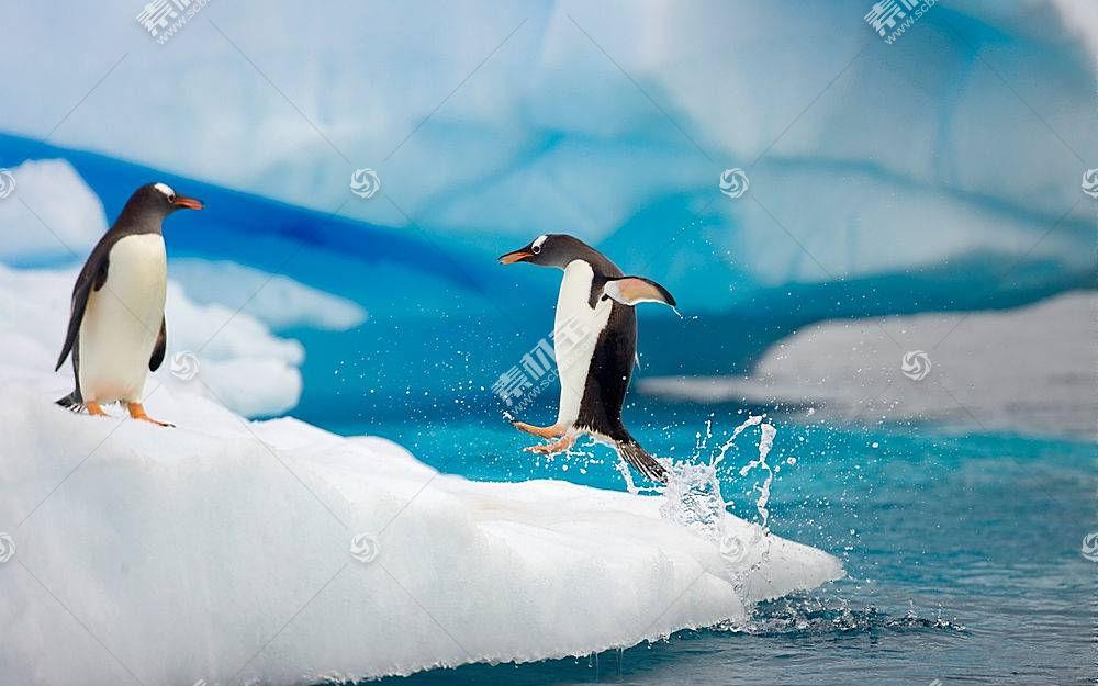 动物,企鹅,冰,鸟类52127