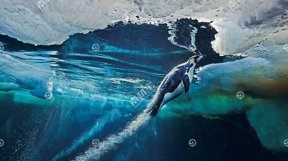 动物,企鹅,鸟类,水下182994
