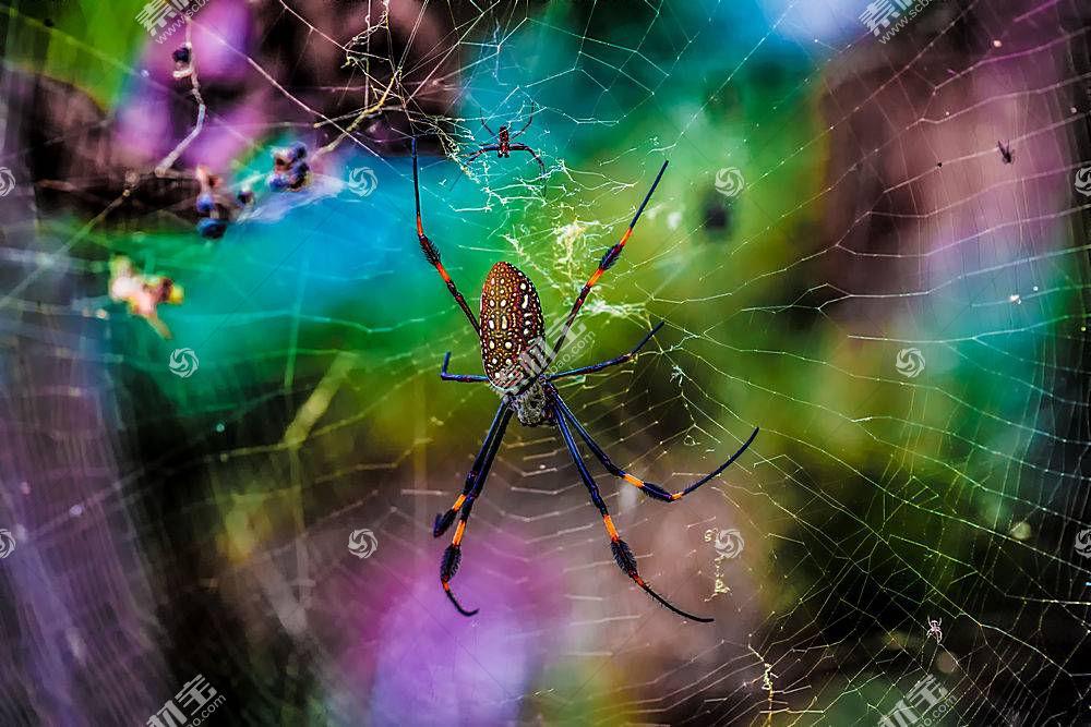 动物,宏,性质,蜘蛛284550