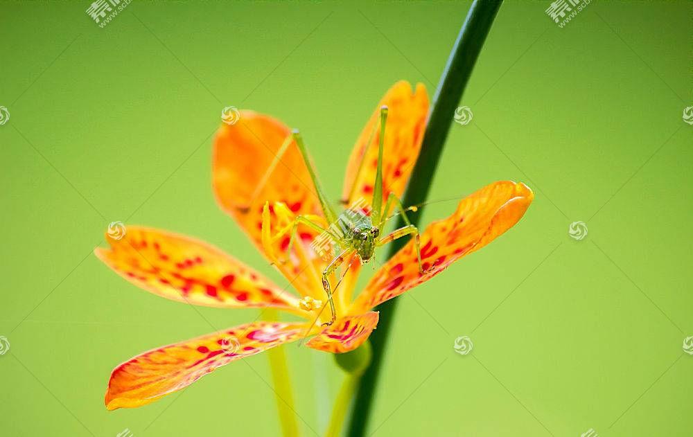 动物,宏,昆虫,花卉,性质338007