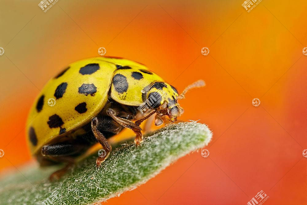 动物,宏,昆虫300489