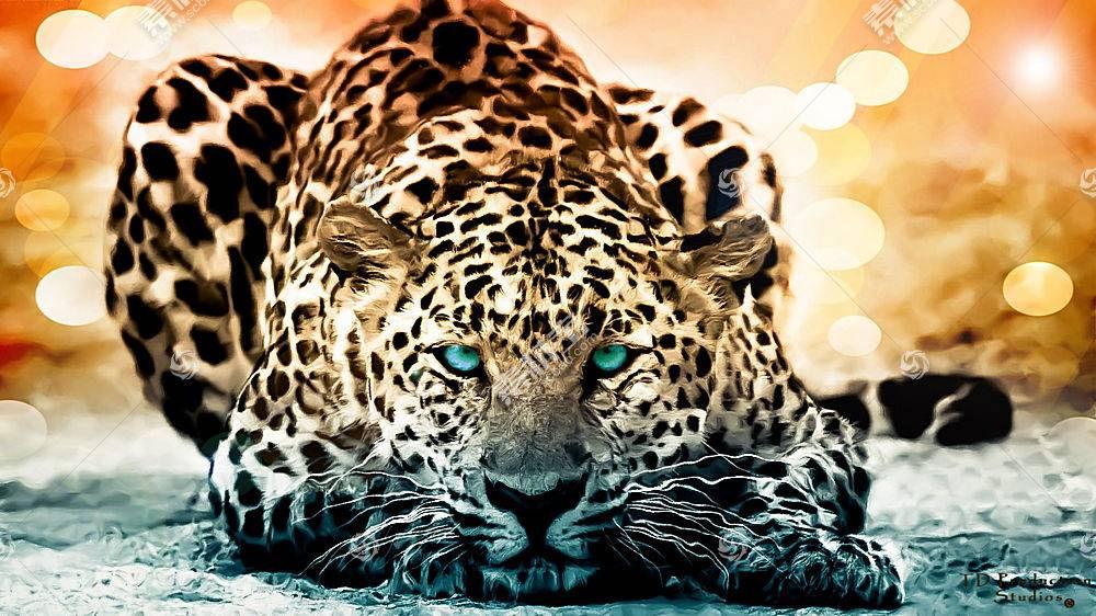 动物,大猫,艺术品122459