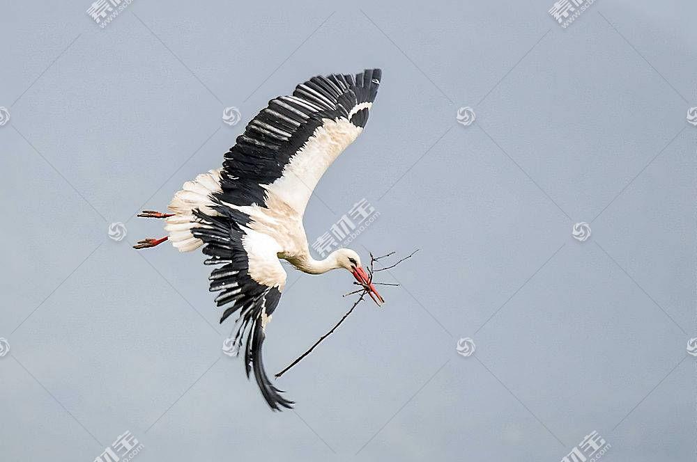 鹳,动物,鸟类648940