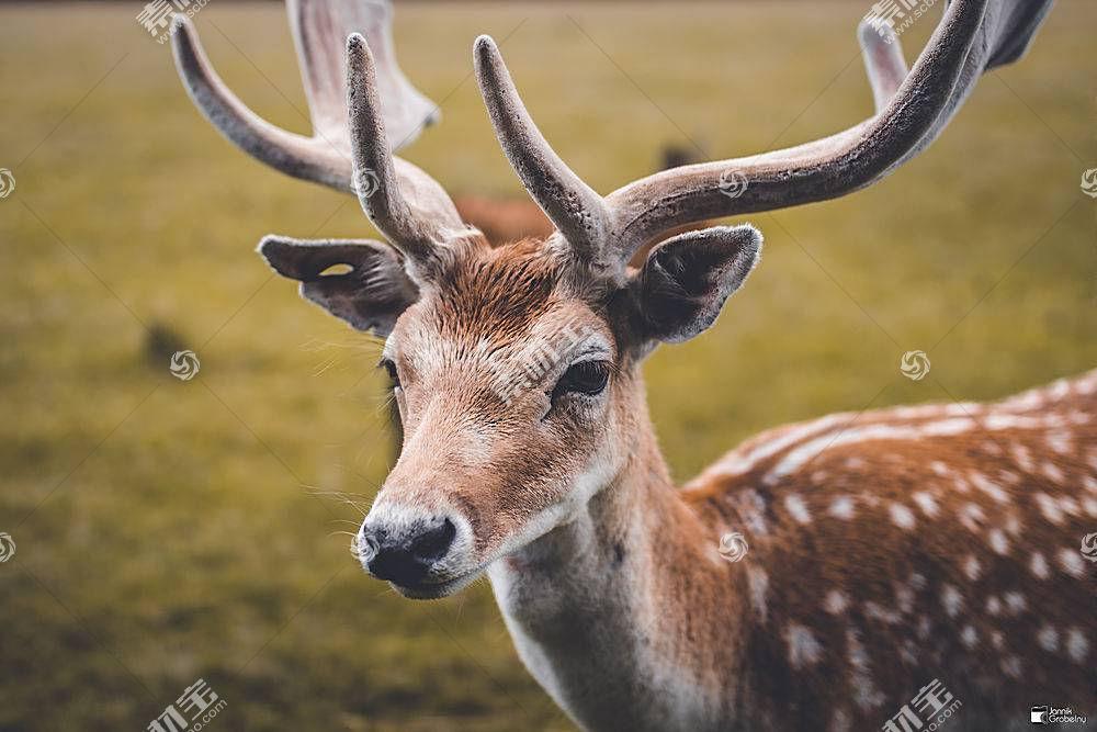 鹿,动物,佳能EOS 700D,教规,西格玛,西格玛艺术545874