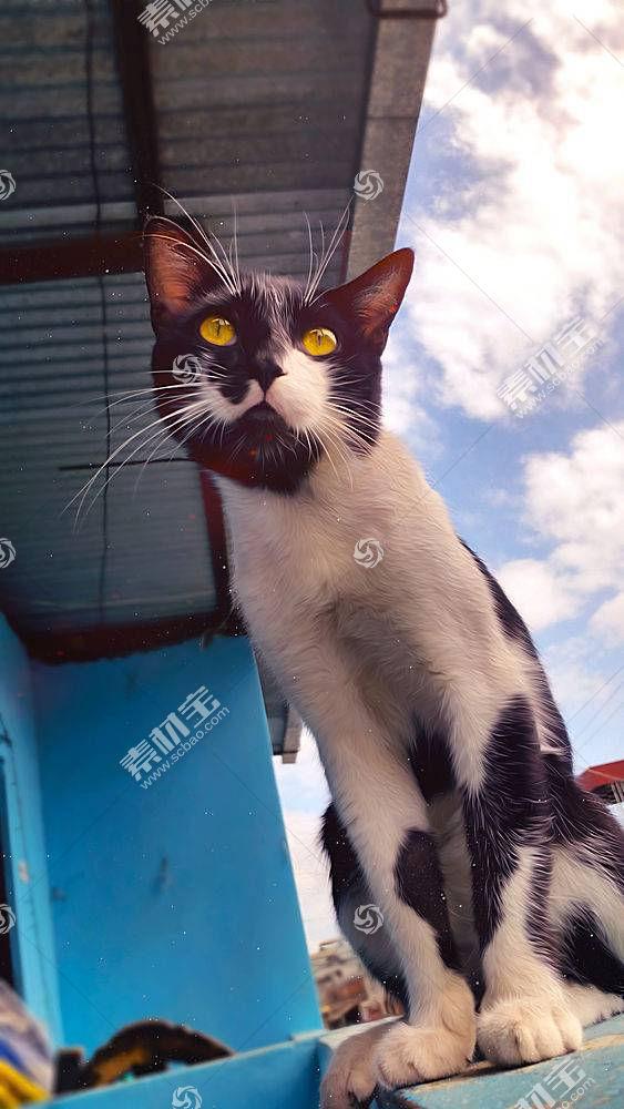 猫,动物537454