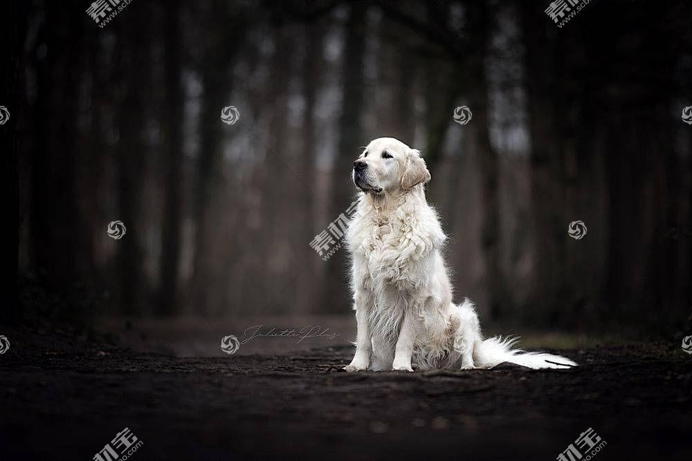 黑暗,动物,狗546671