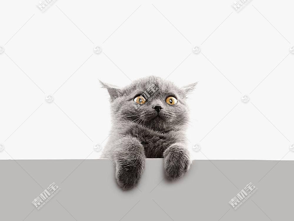 猫,动物581929