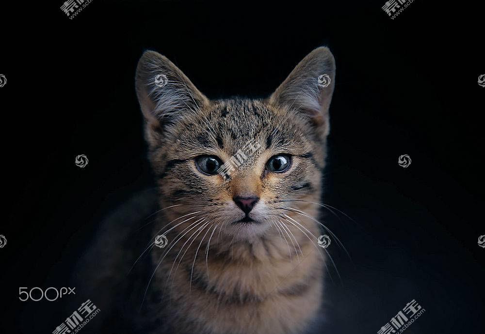 猫,动物585319
