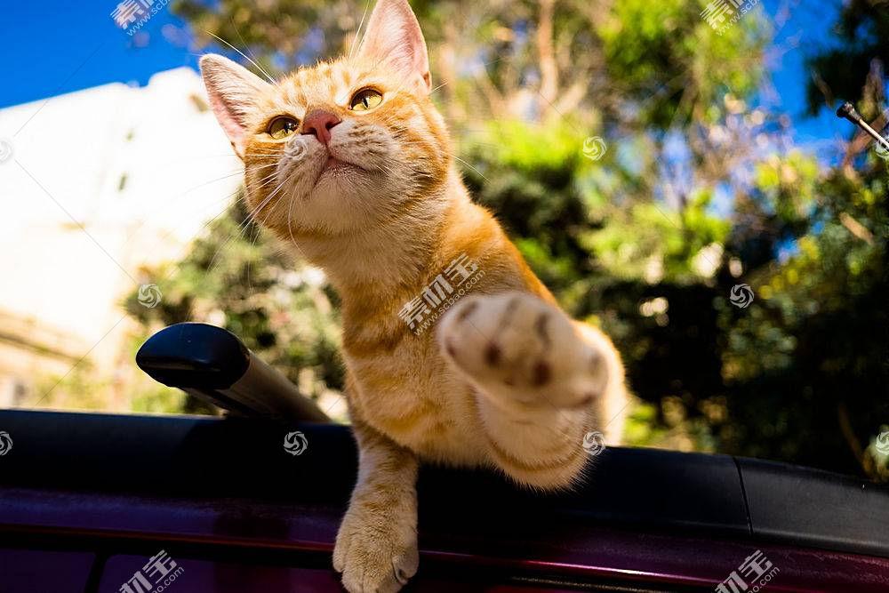 猫,动物590027
