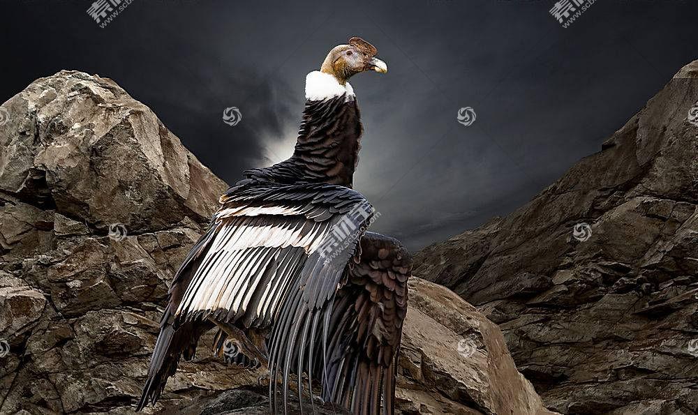 秃鹰,岩,动物,鸟类628813
